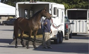 Horse-and-trailer-bob-morin